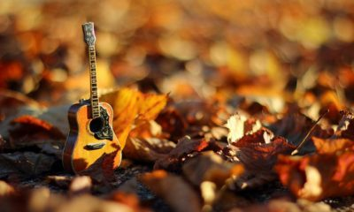 photo of autumn leaves with guitar