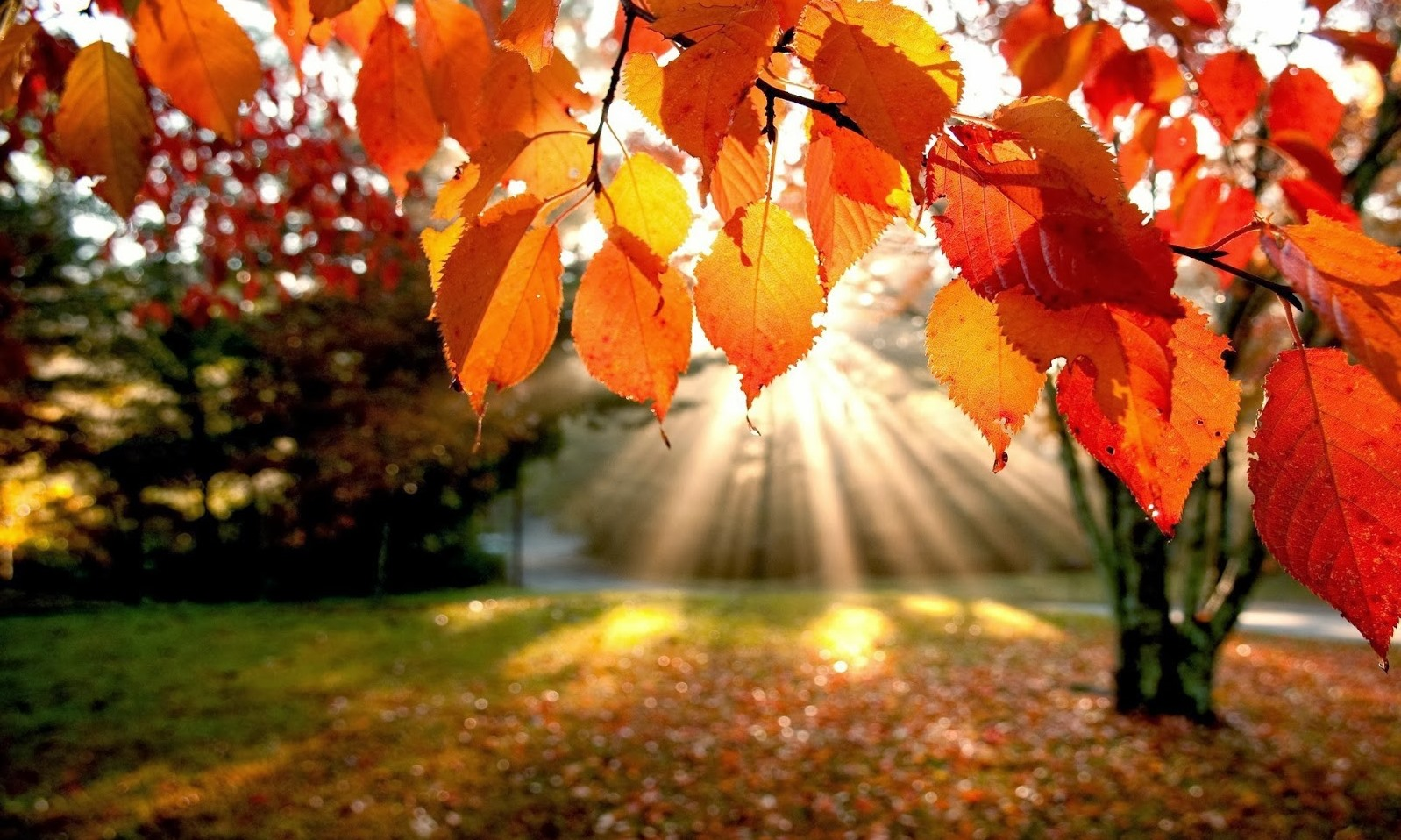 image of fall leaves and sunlight